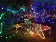 Photo of lighted fish sculpture